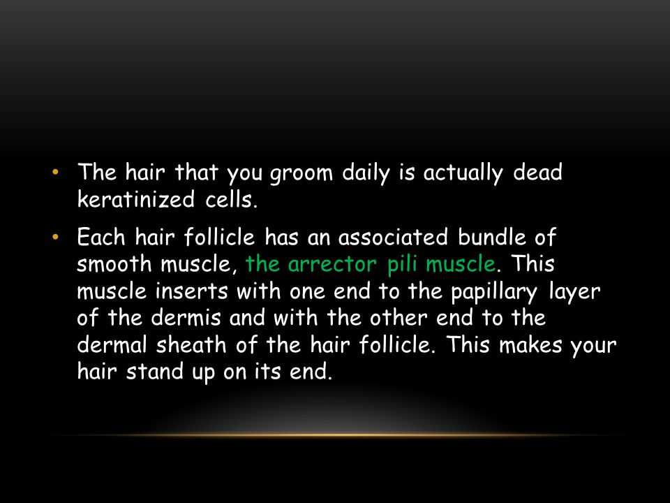 The hair that you groom daily is actually dead keratinized cells.