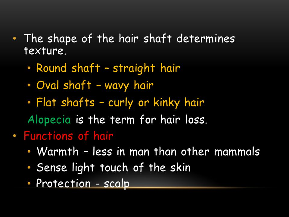 The shape of the hair shaft determines texture.