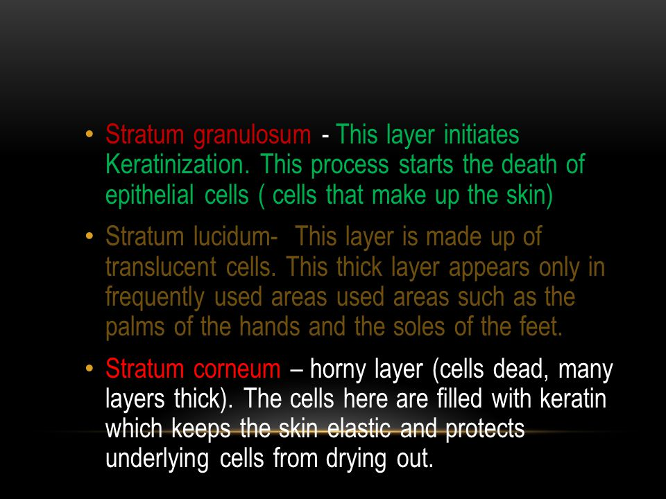 Stratum granulosum - This layer initiates Keratinization