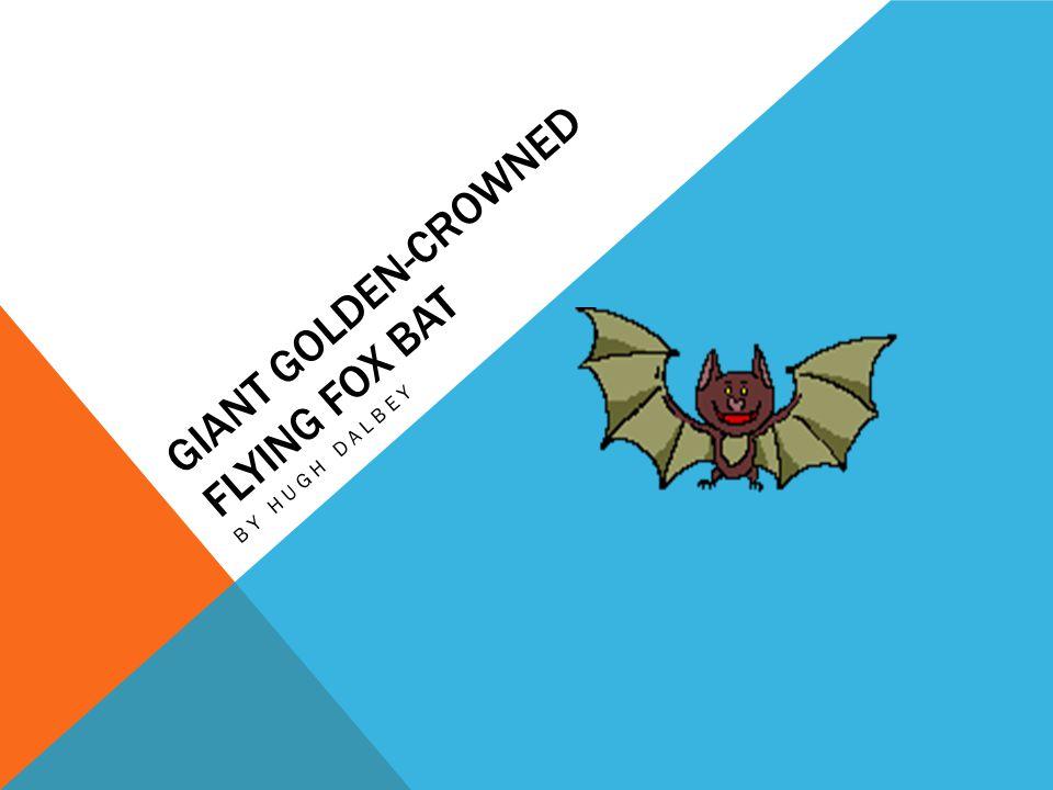 Giant Golden-Crowned Flying Fox Bat