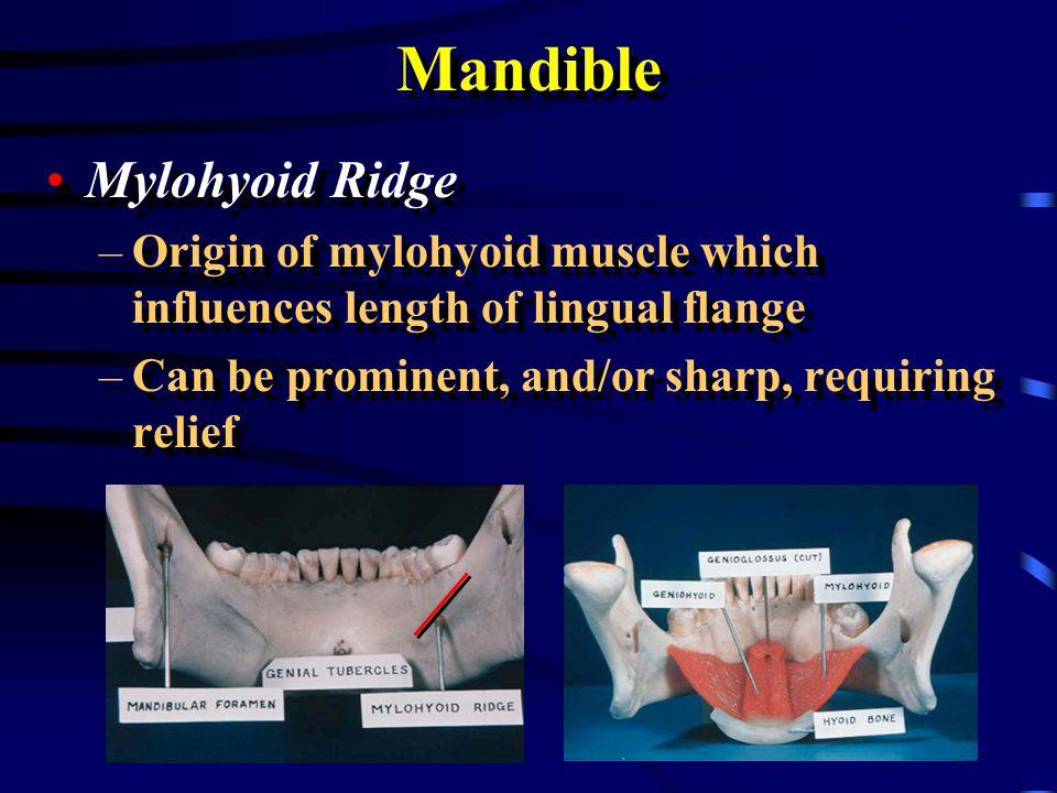 Mandible Mylohyoid Ridge