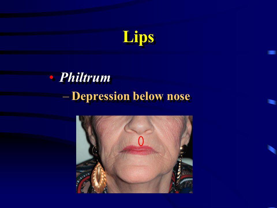 Lips Philtrum Depression below nose