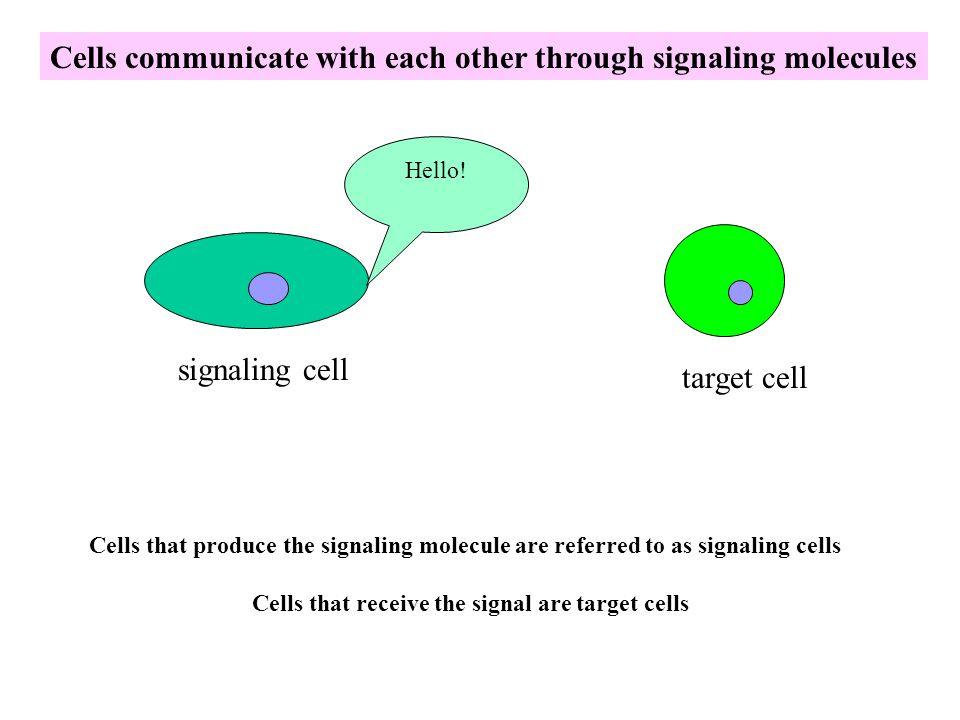 Cells that receive the signal are target cells