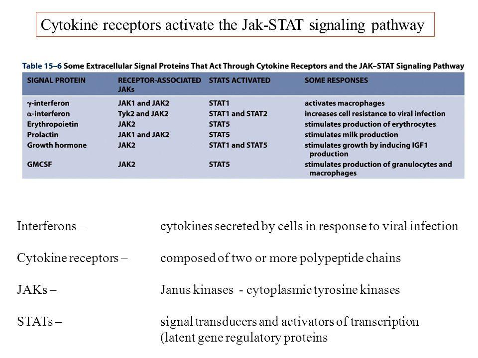 Cytokine receptors activate the Jak-STAT signaling pathway