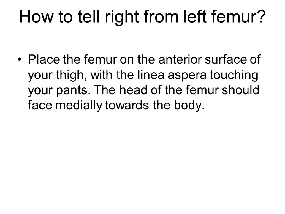 How to tell right from left femur