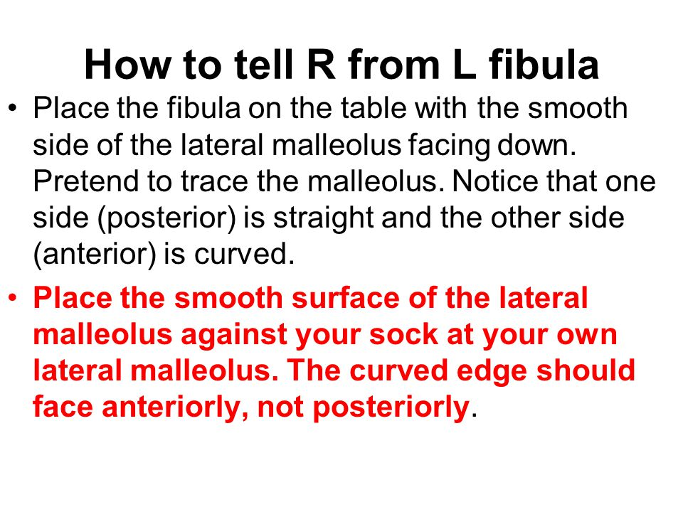 How to tell R from L fibula