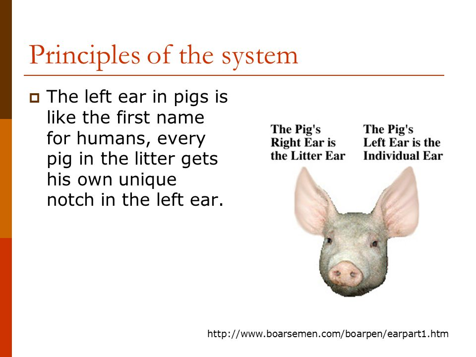 Principles of the system