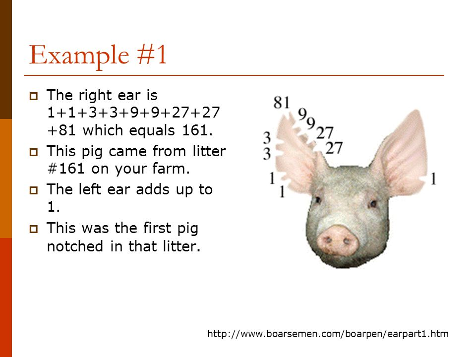 Example #1 The right ear is 1+1+3+3+9+9+27+27+81 which equals 161.
