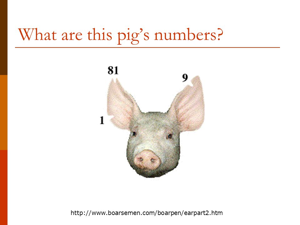 ear notching in swine animal science ppt video online download. Black Bedroom Furniture Sets. Home Design Ideas