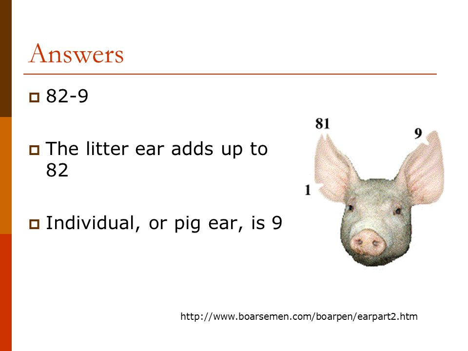 Answers 82-9 The litter ear adds up to 82 Individual, or pig ear, is 9