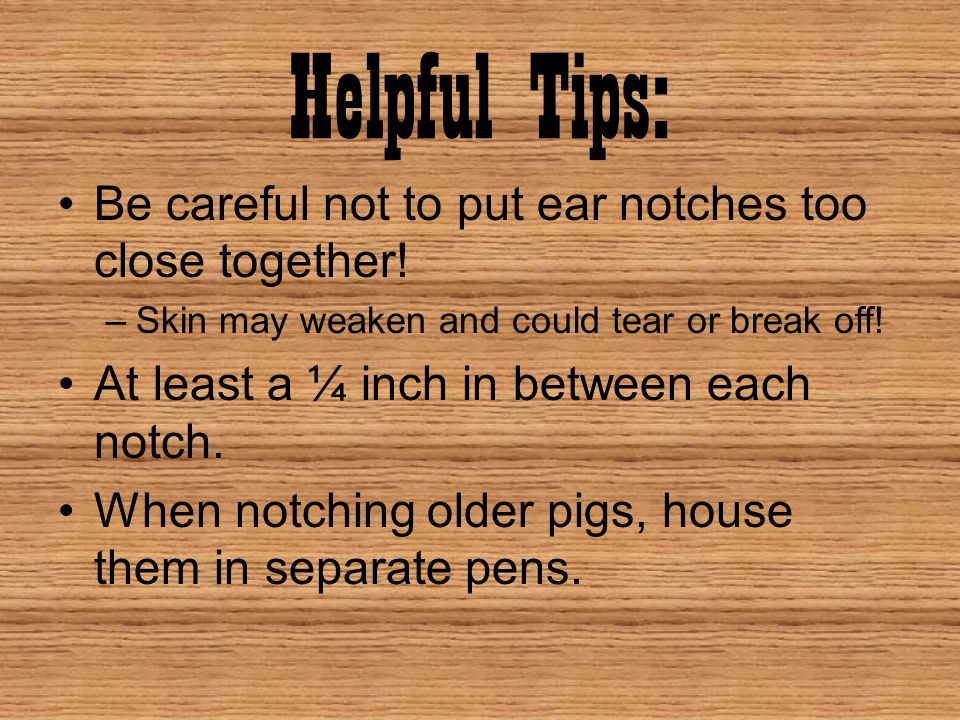 Helpful Tips: Be careful not to put ear notches too close together!