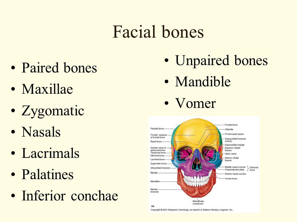 Facial bones Unpaired bones Paired bones Mandible Maxillae Vomer