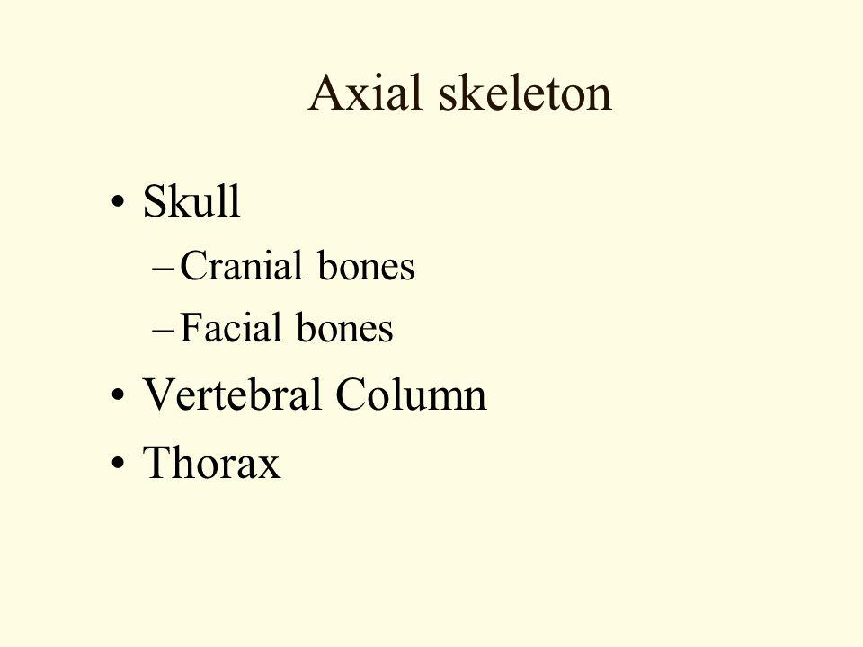 Axial skeleton Skull Vertebral Column Thorax Cranial bones