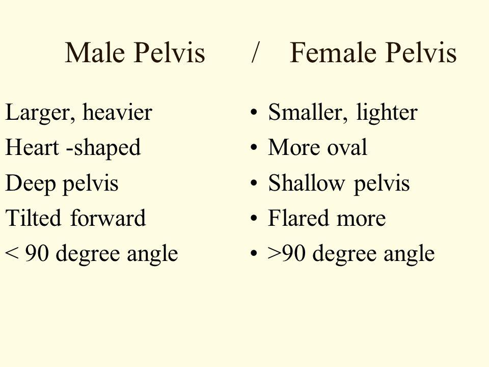 Male Pelvis / Female Pelvis