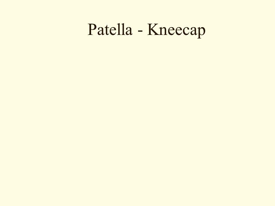 Patella - Kneecap