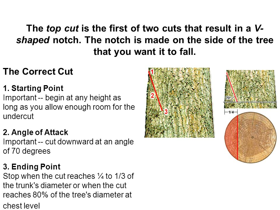 The top cut is the first of two cuts that result in a V-shaped notch