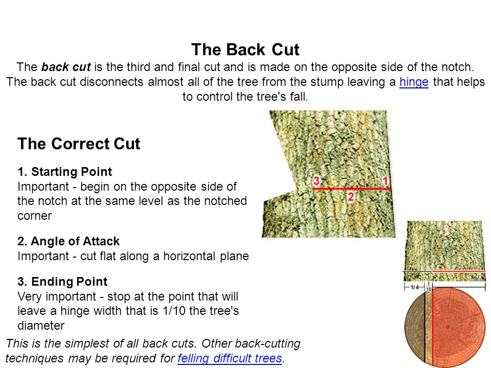 The Back Cut The back cut is the third and final cut and is made on the opposite side of the notch. The back cut disconnects almost all of the tree from the stump leaving a hinge that helps to control the tree s fall.