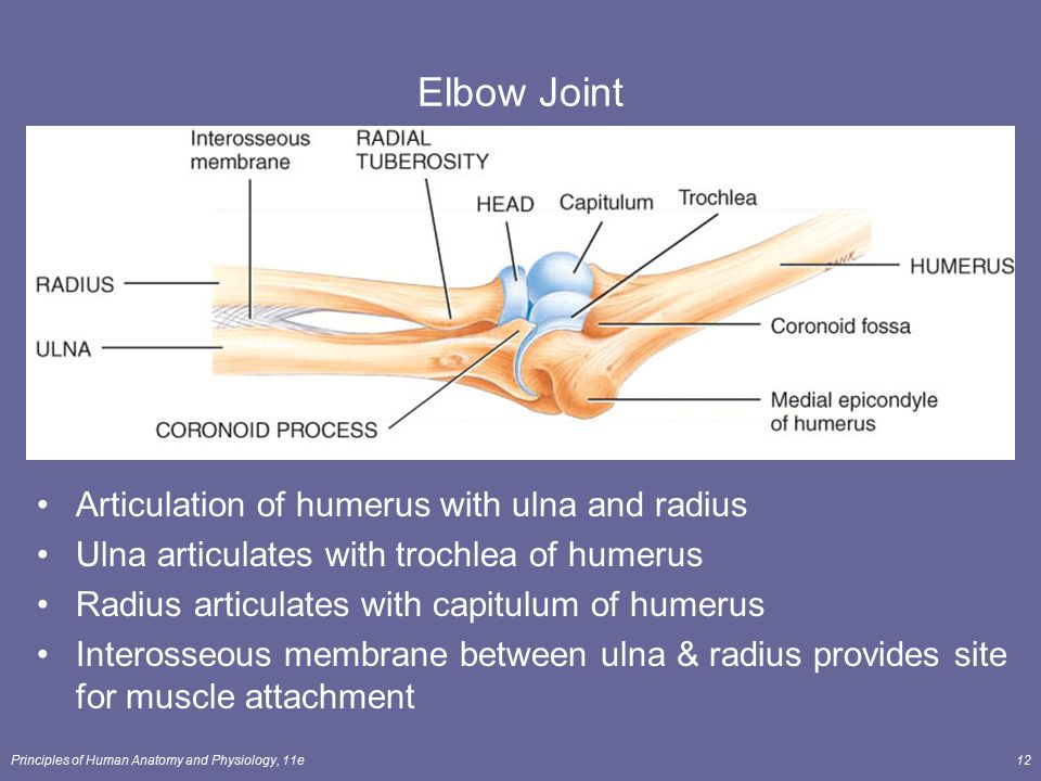 Elbow Joint Articulation of humerus with ulna and radius