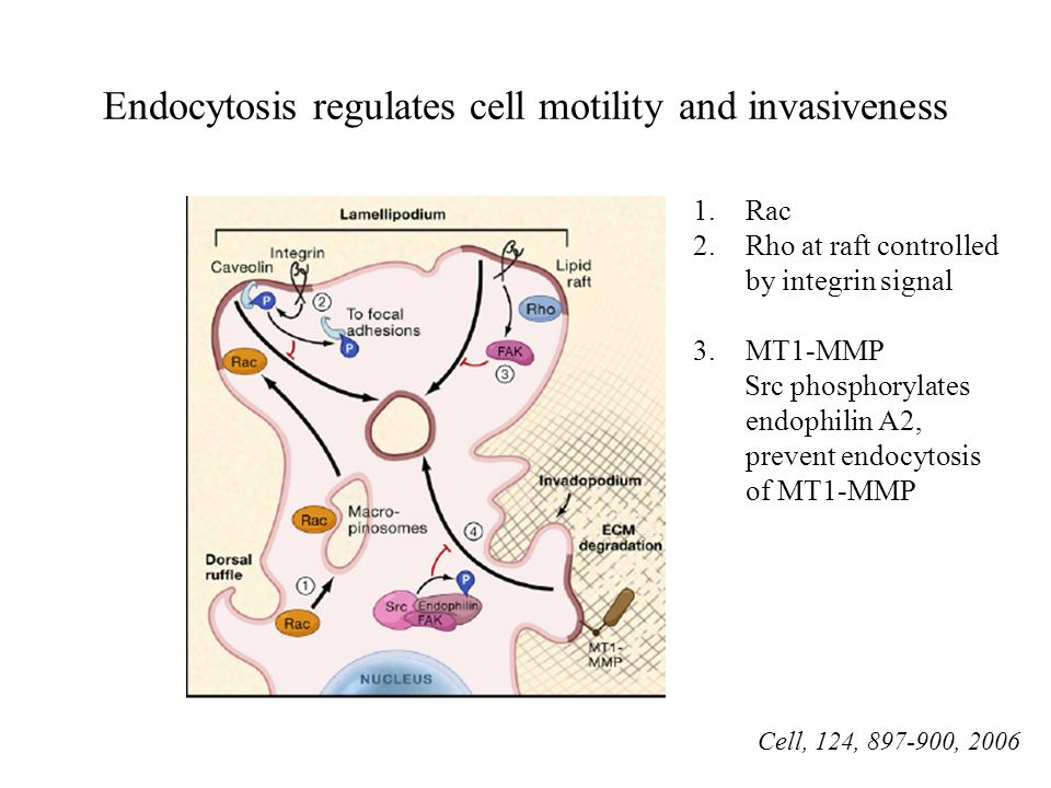Endocytosis regulates cell motility and invasiveness