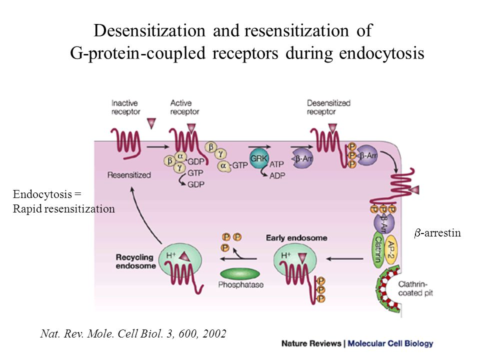 Desensitization and resensitization of