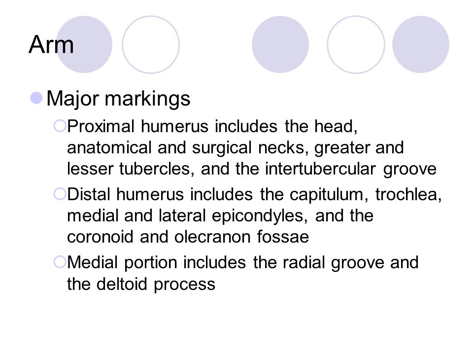 Arm Major markings. Proximal humerus includes the head, anatomical and surgical necks, greater and lesser tubercles, and the intertubercular groove.