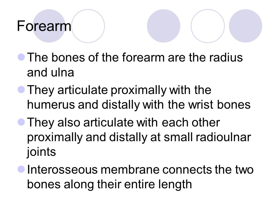 Forearm The bones of the forearm are the radius and ulna