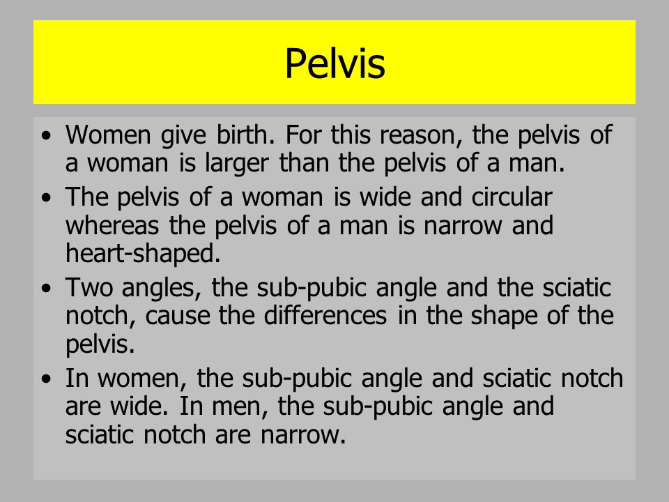 Pelvis Women give birth. For this reason, the pelvis of a woman is larger than the pelvis of a man.