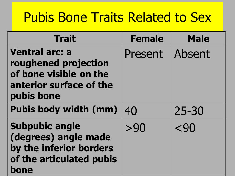 Pubis Bone Traits Related to Sex