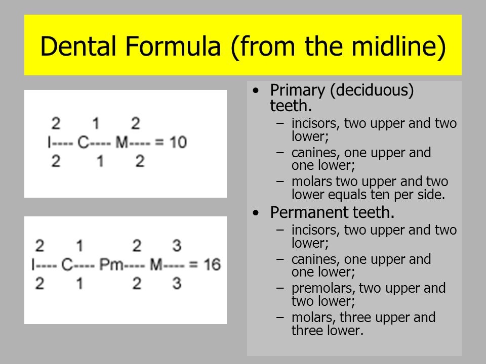 Dental Formula (from the midline)