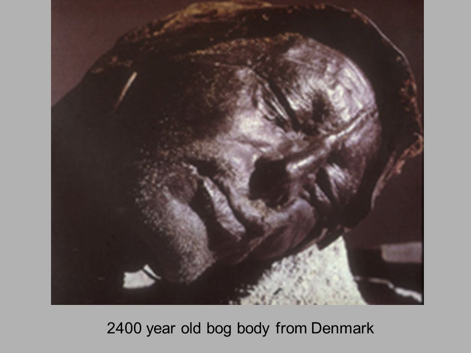 2400 year old bog body from Denmark