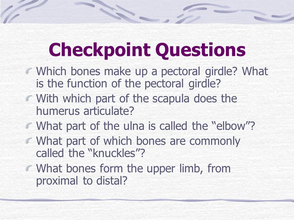 Checkpoint Questions Which bones make up a pectoral girdle What is the function of the pectoral girdle