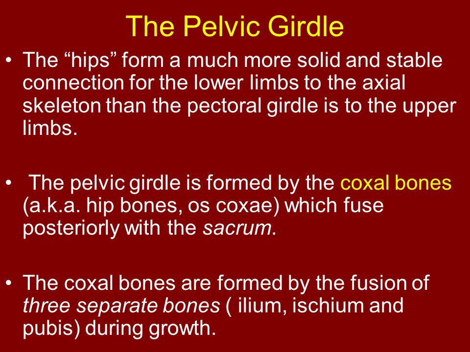 The Pelvic Girdle
