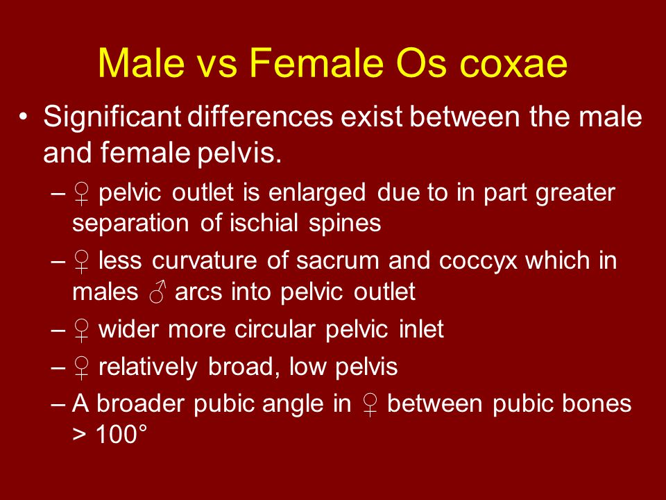 Male vs Female Os coxae Significant differences exist between the male and female pelvis.
