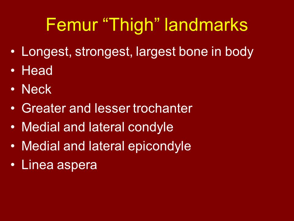 Femur Thigh landmarks