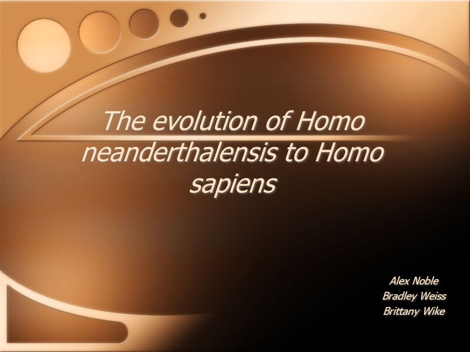 The evolution of Homo neanderthalensis to Homo sapiens