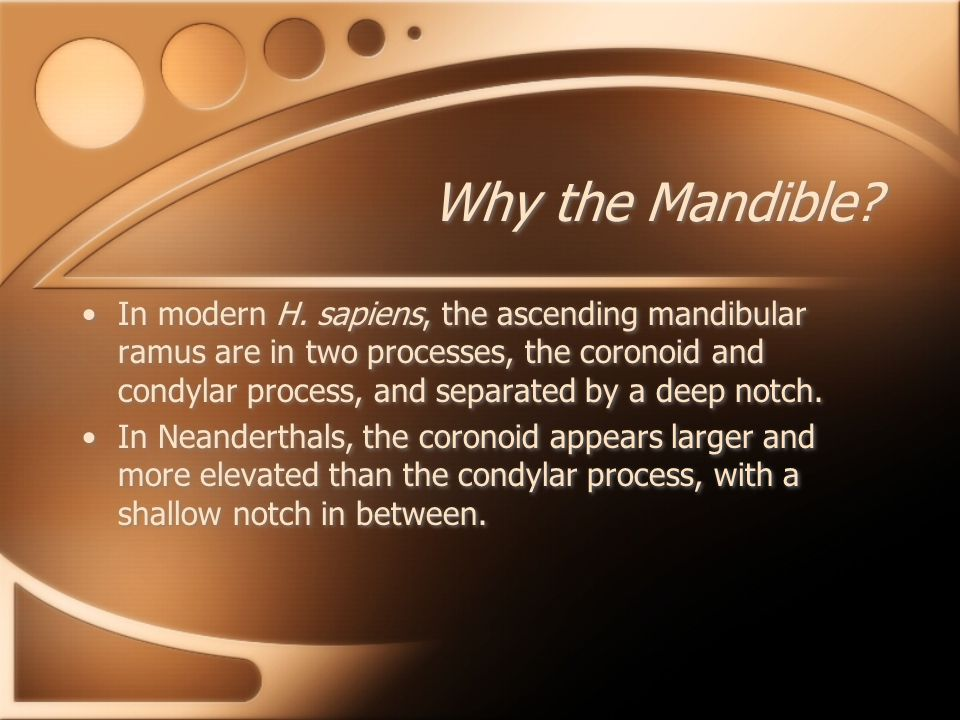 Why the Mandible
