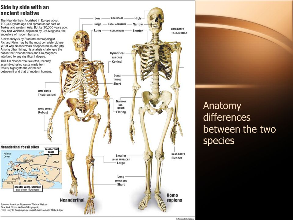 Anatomy differences between the two species