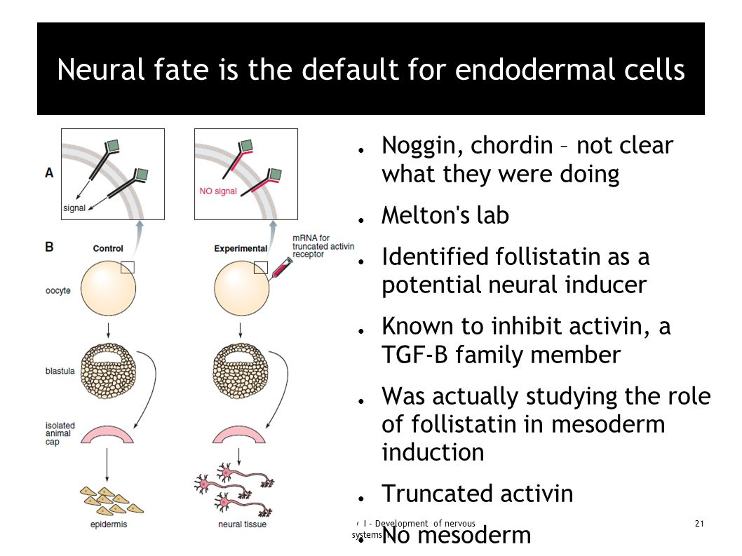 Neural fate is the default for endodermal cells