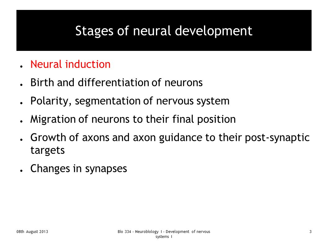 Stages of neural development