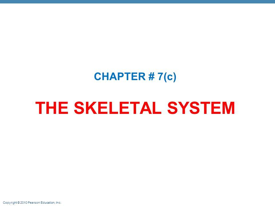CHAPTER # 7(c) THE SKELETAL SYSTEM