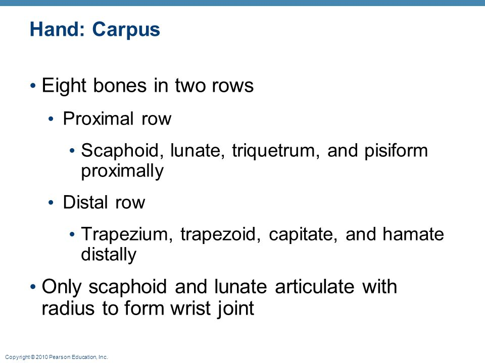 Only scaphoid and lunate articulate with radius to form wrist joint
