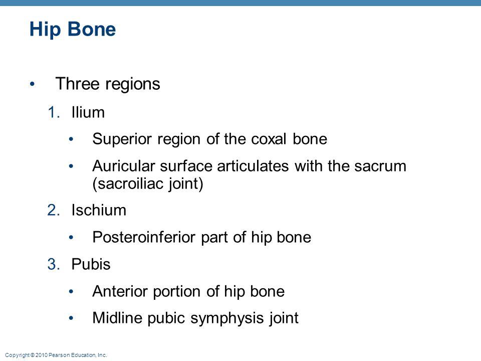 Hip Bone Three regions Ilium Superior region of the coxal bone