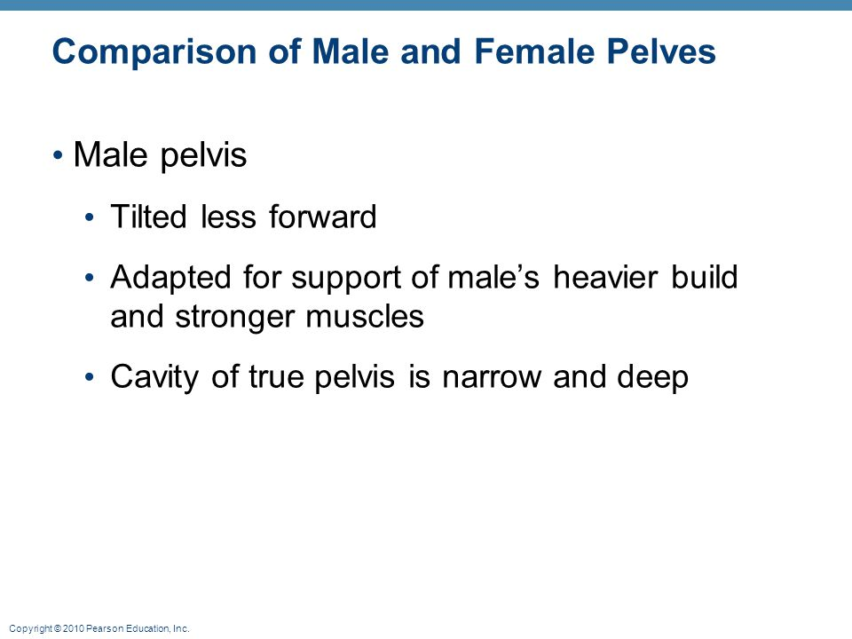 Comparison of Male and Female Pelves