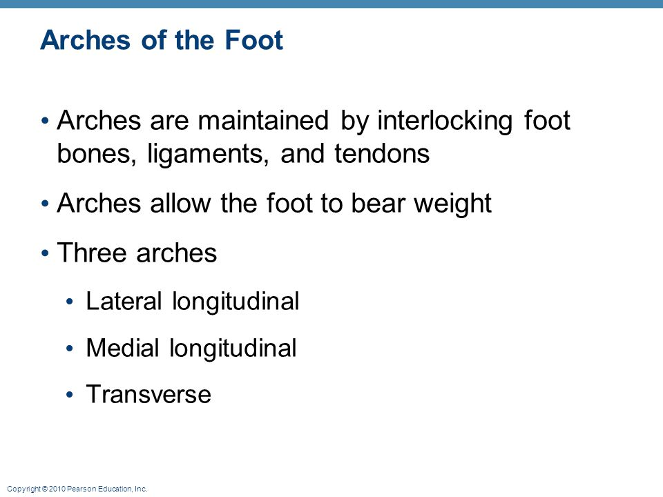 Arches allow the foot to bear weight Three arches