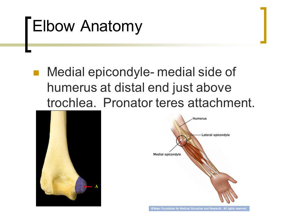 Anatomy of distal humerus 6882093 - follow4more.info
