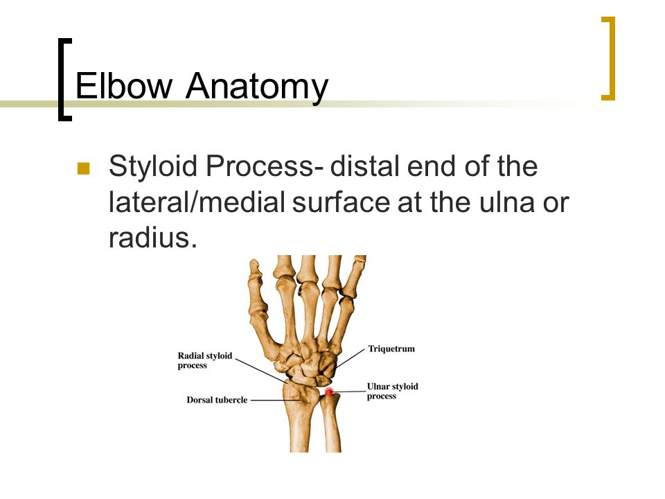 Elbow Anatomy Styloid Process- distal end of the lateral/medial surface at the ulna or radius.