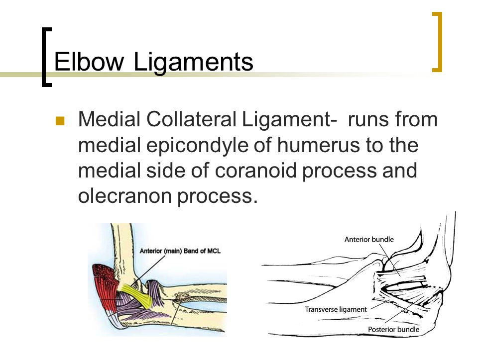 Elbow Ligaments Medial Collateral Ligament- runs from medial epicondyle of humerus to the medial side of coranoid process and olecranon process.