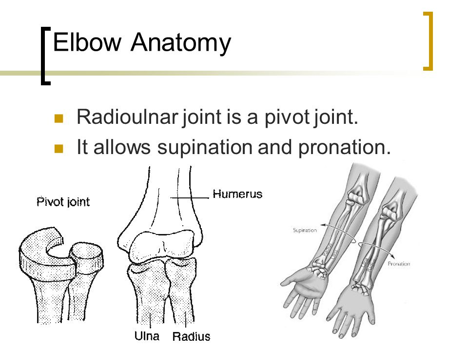 Elbow Anatomy Radioulnar joint is a pivot joint.