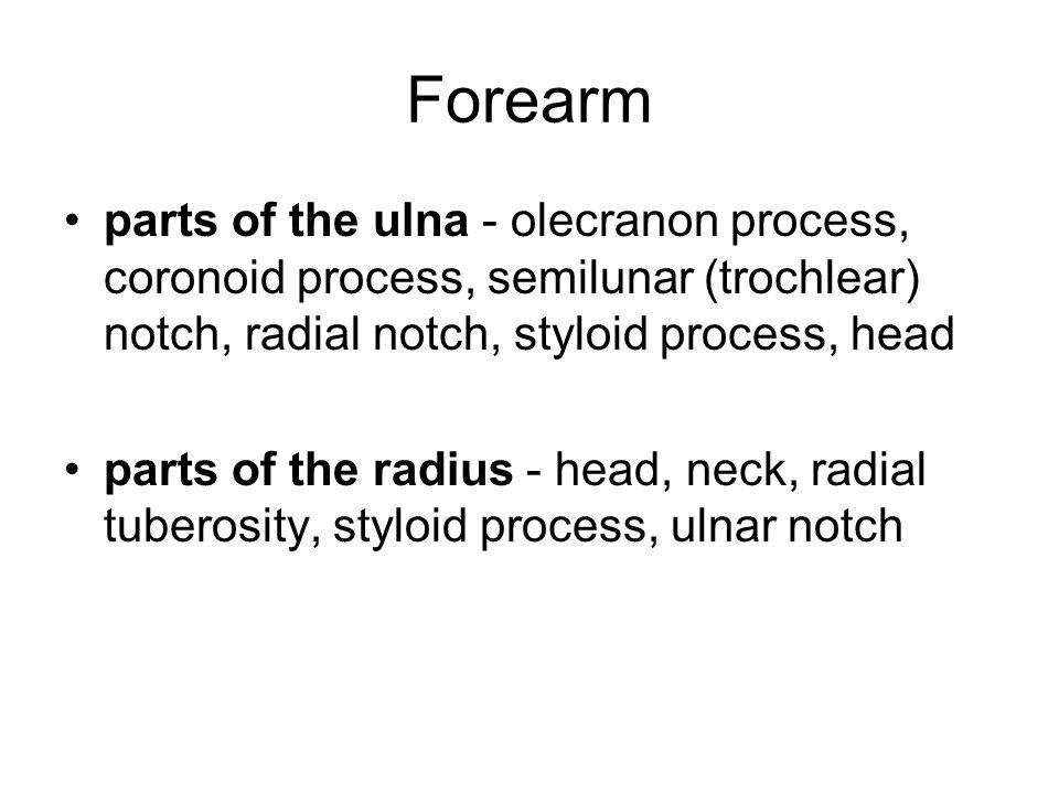 Forearm parts of the ulna - olecranon process, coronoid process, semilunar (trochlear) notch, radial notch, styloid process, head.