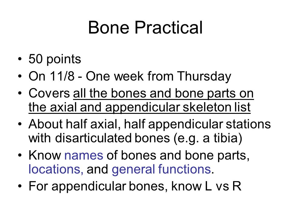 Bone Practical 50 points On 11/8 - One week from Thursday